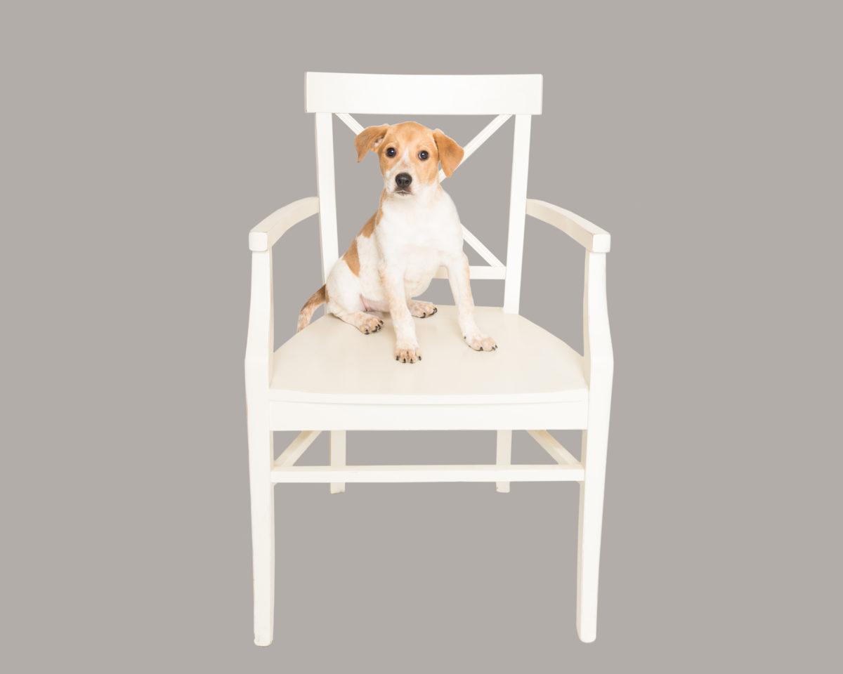 Animal Rescue Fund of the Hamptons – ARF
