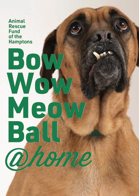 ARF's Bow Wow Meow Ball @home